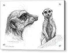 Meerkat - Suricata Suricatta Acrylic Print by Svetlana Ledneva-Schukina