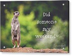 Meerkat Asking If It's The Weekend Yet Acrylic Print