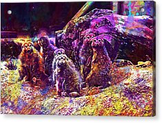 Meerkat Meerkats Family Group  Acrylic Print