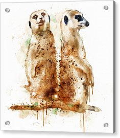 Meerkats Acrylic Print by Marian Voicu