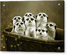 Acrylic Print featuring the digital art Meerkats by Thanh Thuy Nguyen