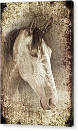 Meet The Andalucian Acrylic Print by Meirion Matthias