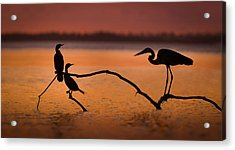 Meeting At Sunset Acrylic Print by Jean-luc Besson