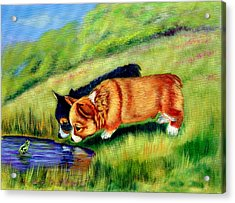 Meeting Mr. Frog Corgi Pups Acrylic Print by Lyn Cook