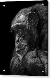 Melancholy Acrylic Print by Paul Neville