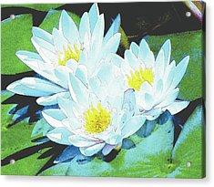 Meliora Acrylic Print