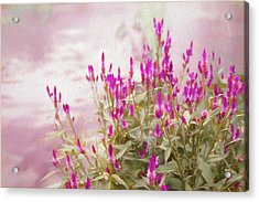 Mellow Afternoon Acrylic Print