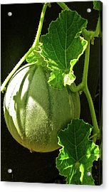 Mellow Mellon Acrylic Print by Gwyn Newcombe