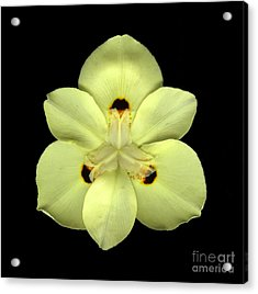Mellow Yellow Acrylic Print by Christian Slanec