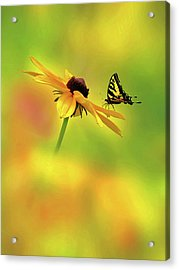 Mellow Yellow Acrylic Print by John Poon