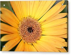 Acrylic Print featuring the photograph Mellow Yellow by Ron Read
