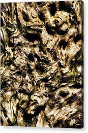 Melting Wood Acrylic Print by Wim Lanclus