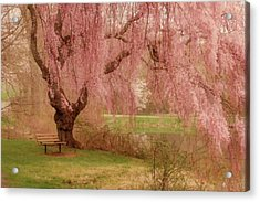 Memories - Holmdel Park Acrylic Print