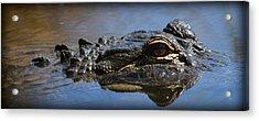 Menacing Alligator Acrylic Print