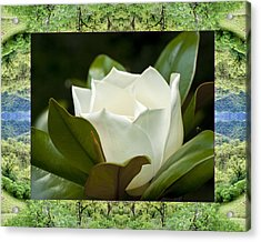 Acrylic Print featuring the photograph Mendocino Magnolia by Bell And Todd