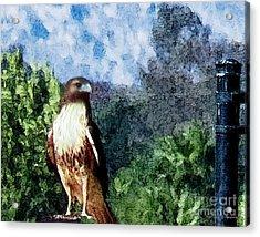 Menifee Falcon Acrylic Print