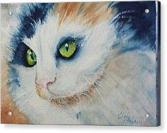 Meow II Acrylic Print by Elaine Frances Moriarty