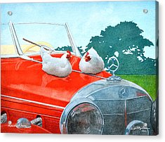 Mercedes Hens... Acrylic Print by Will Bullas