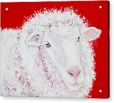Merino Sheep Acrylic Print by Jan Matson