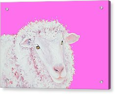 Merino Sheep On Hot Pink Acrylic Print