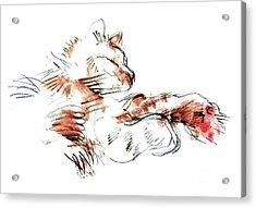 Merph Chillin' - Pet Portrait Acrylic Print