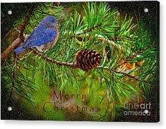 Merry Christmas Card With Bluebird Acrylic Print
