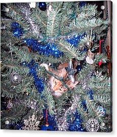 Merry Christmas Kitty Acrylic Print by CGHepburn Scenic Photos