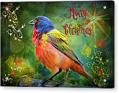 Merry Christmas Painted Bunting Acrylic Print by Bonnie Barry