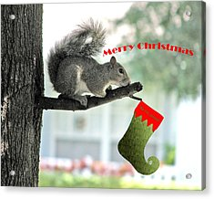 Merry Christmas To All Acrylic Print by Adele Moscaritolo