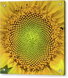 Acrylic Print featuring the photograph Mesmerizing by Bill Pevlor