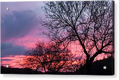 Mesquite Tree Sunset Acrylic Print
