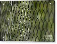 Metal Fence Acrylic Print
