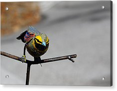 Acrylic Print featuring the photograph Metallic Bunting by Richard Patmore