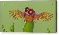 Mexican Owl Acrylic Print
