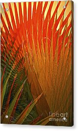 Mexican Palm Acrylic Print