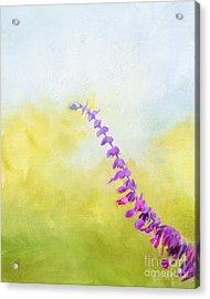 Mexican Sage 9534 Acrylic Print