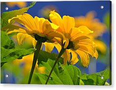 Mexican Sunflower Tree Acrylic Print by Melanie Moraga
