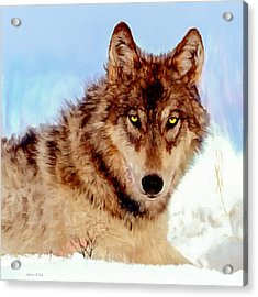 Mexican Wolf Painting Acrylic Print