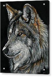 Mexican Wolf Acrylic Print