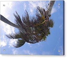 Miami Palms Acrylic Print by JAMART Photography