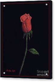 The Perfect Rose 2 Acrylic Print by Becky Lupe