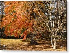 Michigan Autumn 1 Acrylic Print