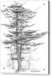 Michigan-eastern White Pine Acrylic Print