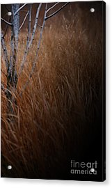 Michigan Acrylic Print by Linda Shafer