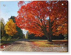 Michigan Spellbound Acrylic Print