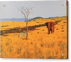 Mid  Day In Tsavo Acrylic Print