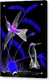 Mid-night Humming Bird Acrylic Print