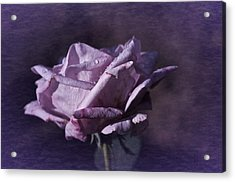 Acrylic Print featuring the photograph Mid September Purple Rose by Richard Cummings