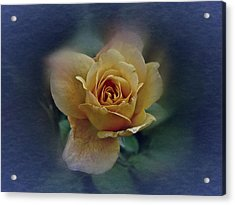 Acrylic Print featuring the photograph Mid September Rose by Richard Cummings