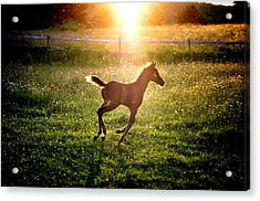 Mid Summer Nights Dream Acrylic Print by Emily Stauring